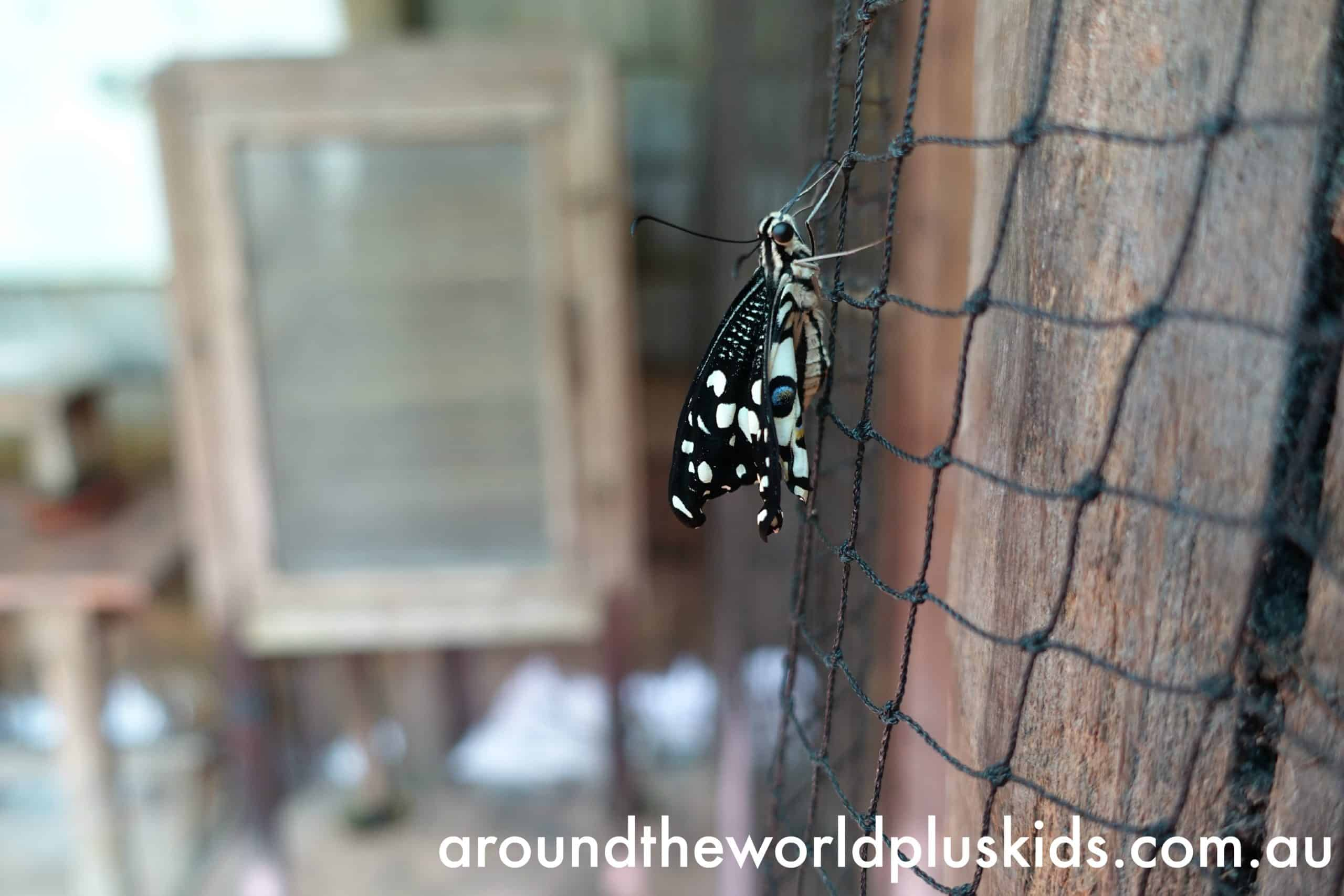 Banteay Srey Butterfly Centre, Siem Reap  Around The ...