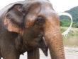 Elephant Nature Park Review – Chiang Mai